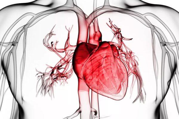 انواع بیماری های قلبی و عروقی